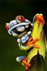 Final frog