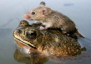Flabbergasted frog