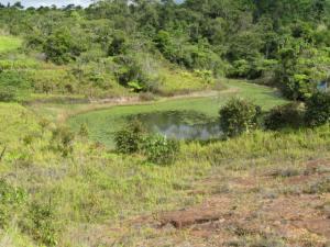 GOF's dam