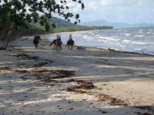 Newell beach horses