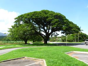Tropical shade 2