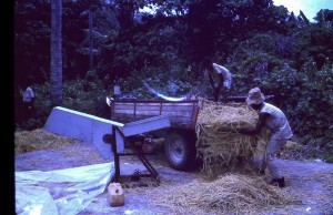 Bonga village rice threshing 1974