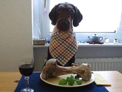 upper class dog