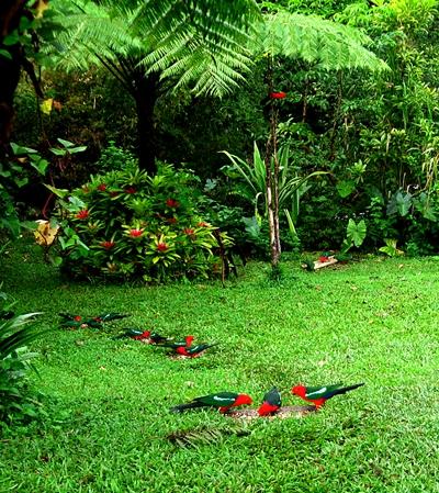 parrot feeding time